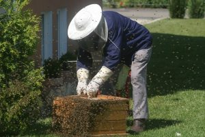 Bee Keeping: The Money Making Business
